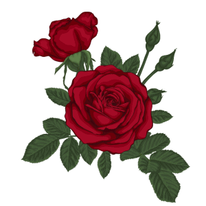 8 Vector hoa hồng