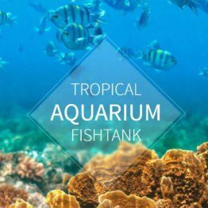 FishTank - Shop HTML Template