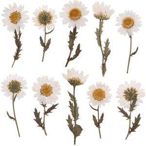 30 hình ảnh hoa khô chất lượng cao tuyệt đẹp dành cho bạn