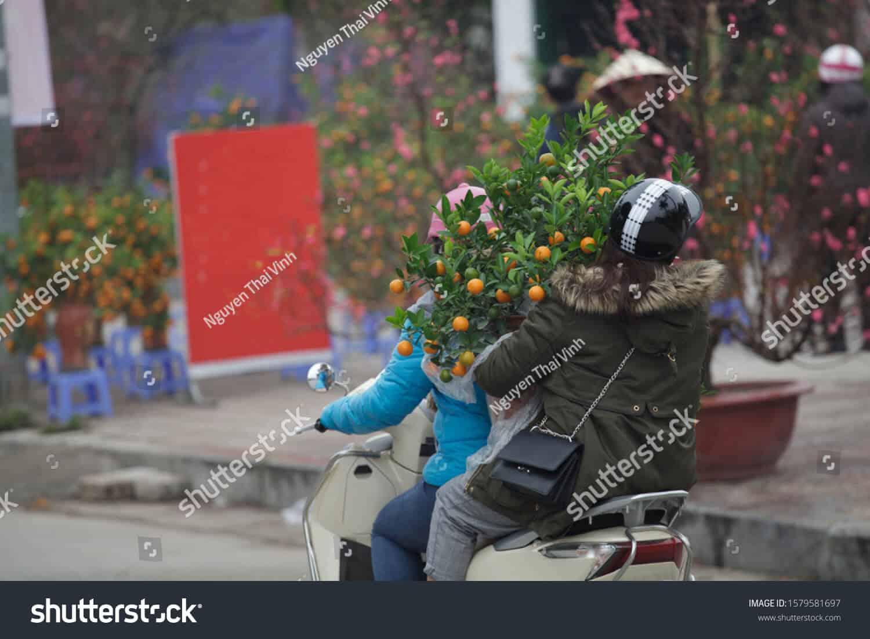 26 ngàn hình ảnh cây quất ngày Tết chất lượng cao trên Shutterstock