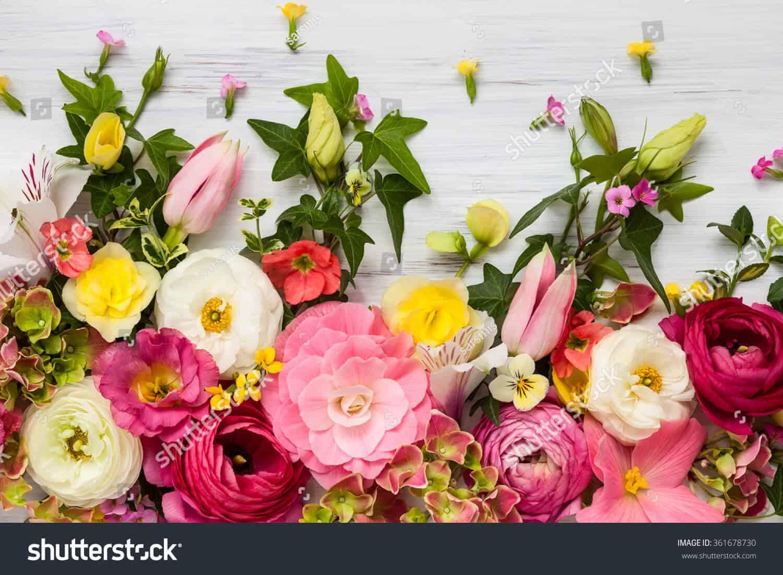 28 triệu hình ảnh hoa chất lượng cao dành cho ngày 8/3 trên Shutterstock