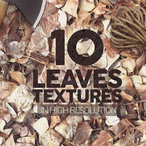 10 Textures lá cây khô - KS565
