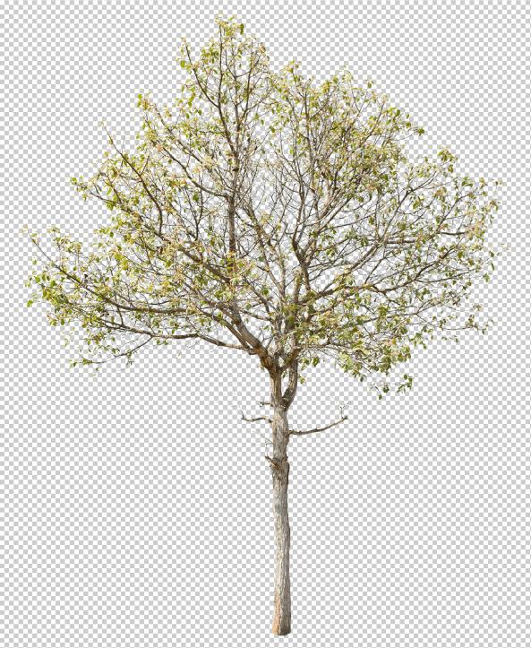 20 PNG cây chất lượng cao - KS691
