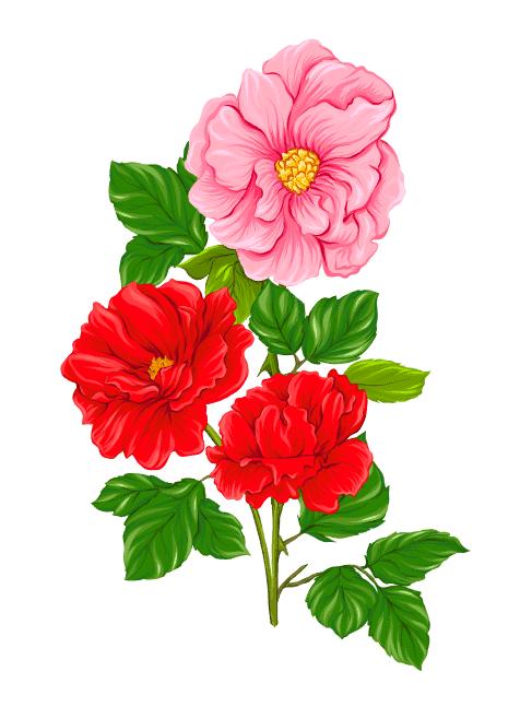 5 Vector hoa tuyệt đẹp - KS700