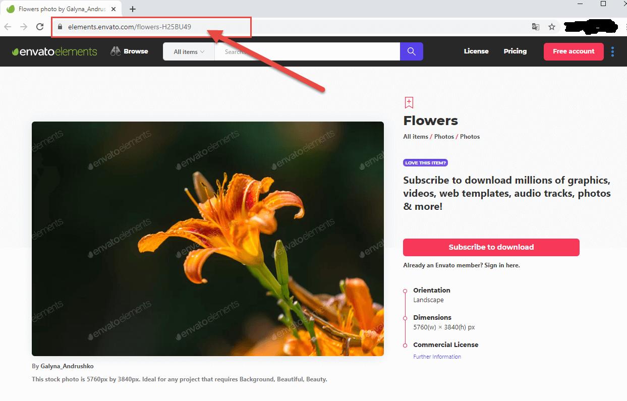 Download Elements Envato chất lượng cao giá rẻ trên Kho Stock