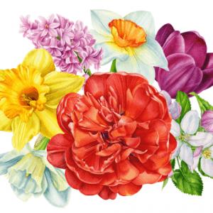 Hình ảnh hoa màu nước chất lượng cao tuyệt đẹp