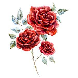 Stock Hoa Hồng Đỏ màu nước - KS779