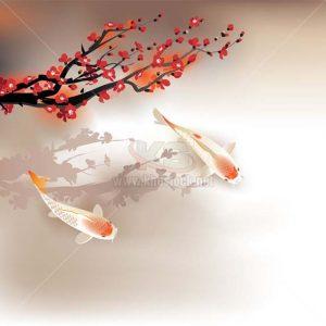 Cá Koi và Hoa Đào Vector - KS1193