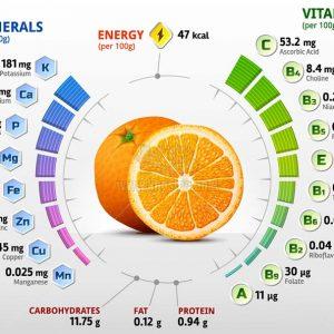 Dinh dưỡng trong quả Cam Vector - KS1245